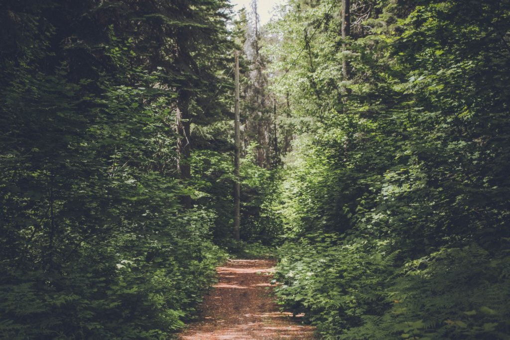 A path in the forest as a symbol of thought-leadership content telling its consumers where to go from here.